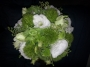 lime-green-and-white-bouquet